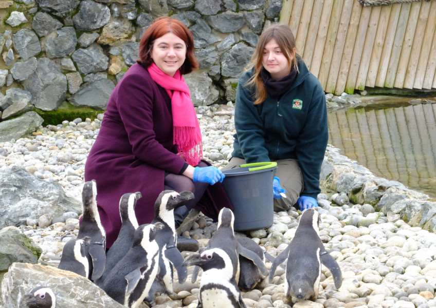 On February 22, Norfolk Euro MP Alex Mayer visited the penguins at Banham Zoo to urge Norfolk residents to get behind the campaign to create the world's biggest wildlife sanctuary in Antarctica. Submitted picture.