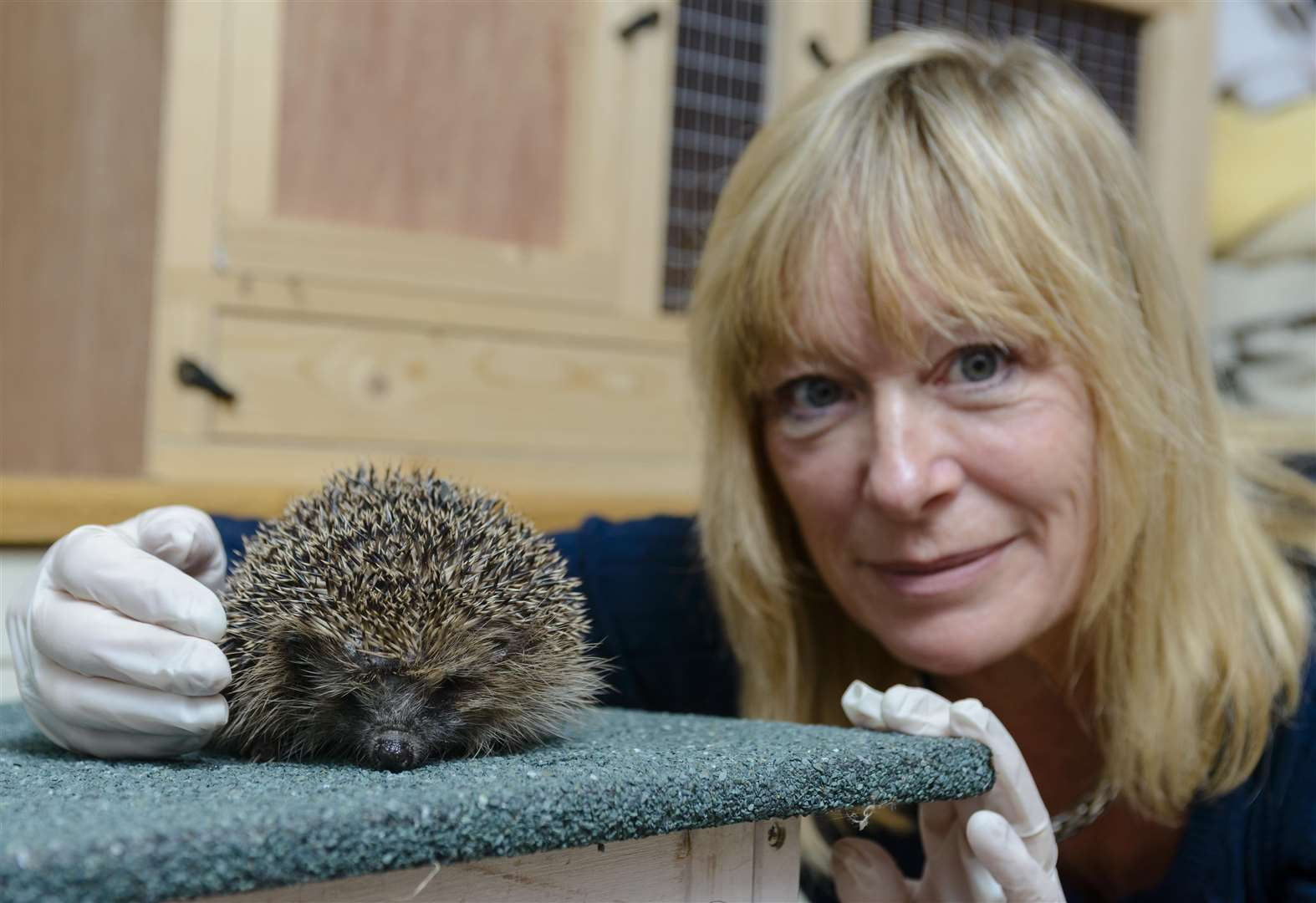 Woman's mission to help baby hedgehogs