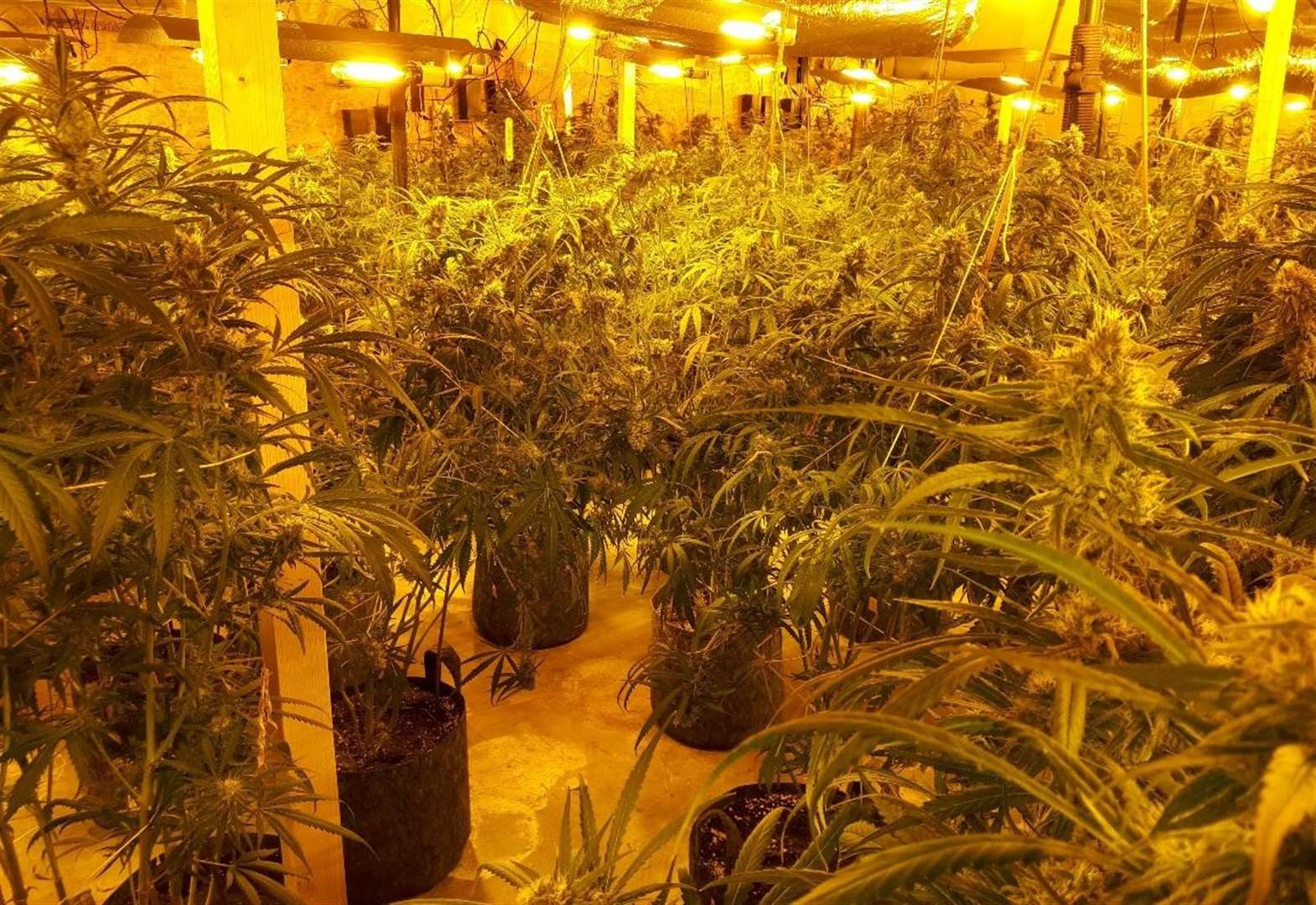 Two jailed for £1m cannabis farm