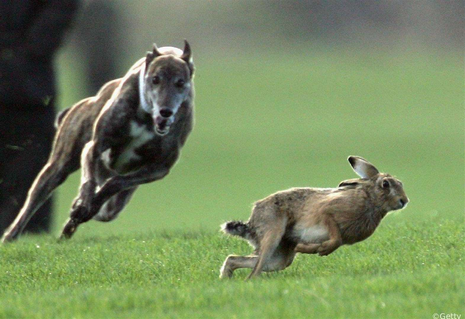Man arrested for hare coursing and other offences