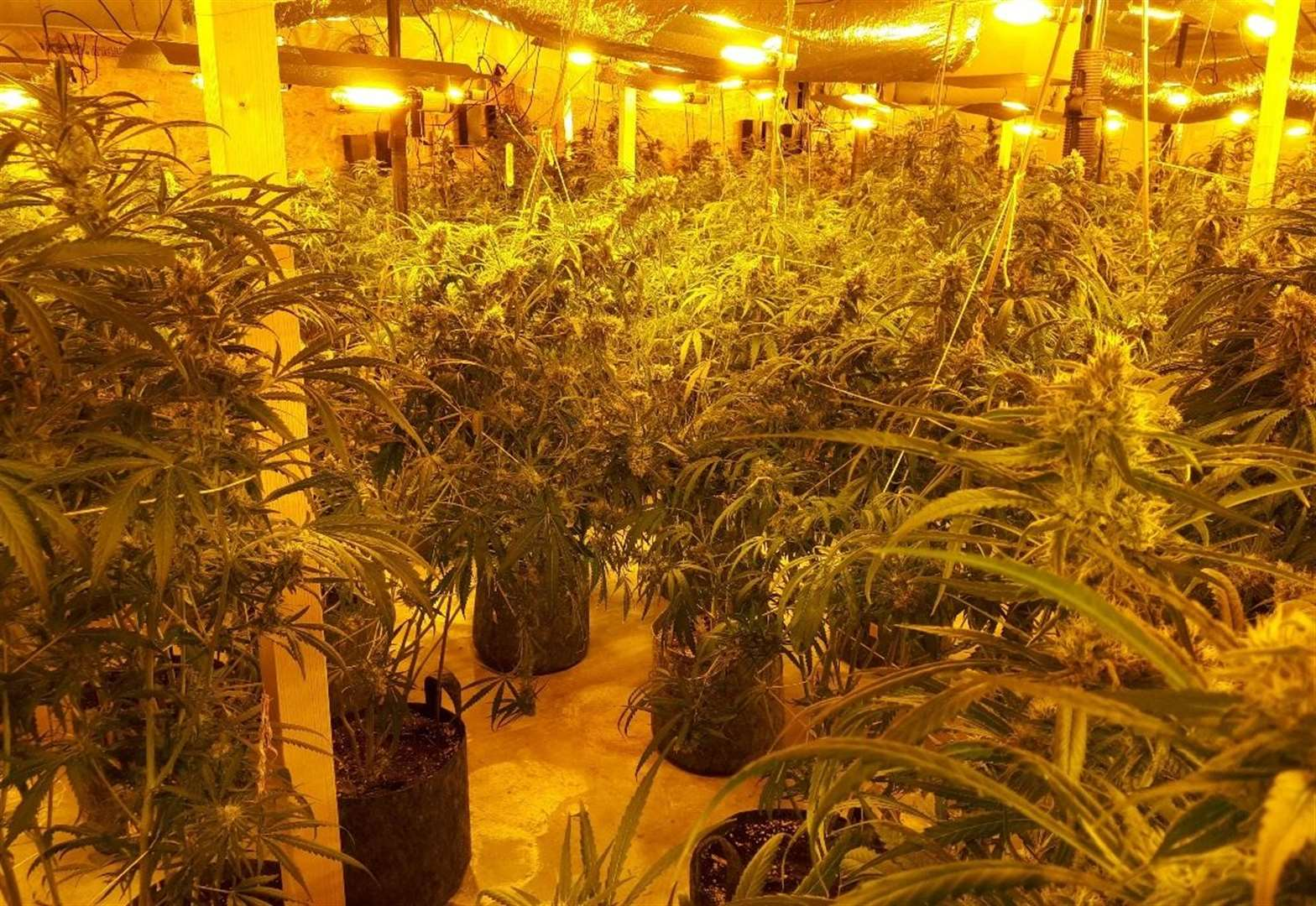 Two arrested after £1m cannabis factory found in Redgrave