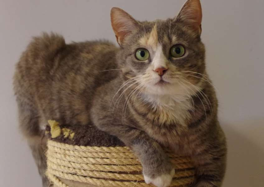 CAT OF THE WEK: Can you home the beautiful Ida?