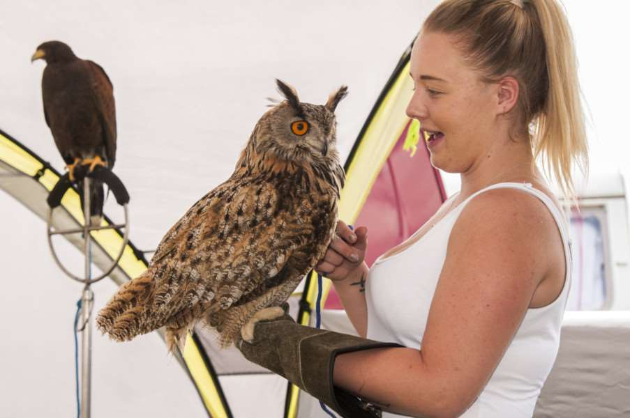 Journey Through The Ages : Vintage Rally and Country Fair at Palgrave. Broadwing bird controls' display of birds of prey.