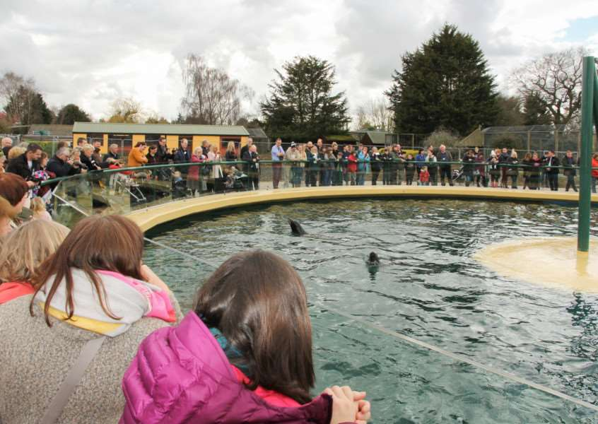 Crowds gather for the launch of Sea Lion Bay