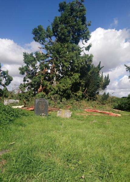 A lightning strike in the early hours of Sunday morning has brought down a tree in Eye Cemetery.