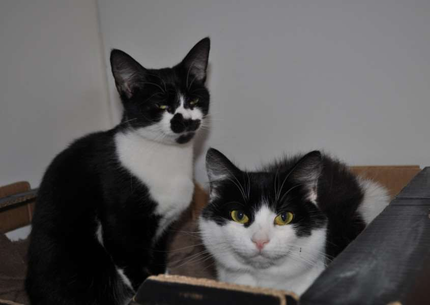 Cats of the Week - Holly and Harley.