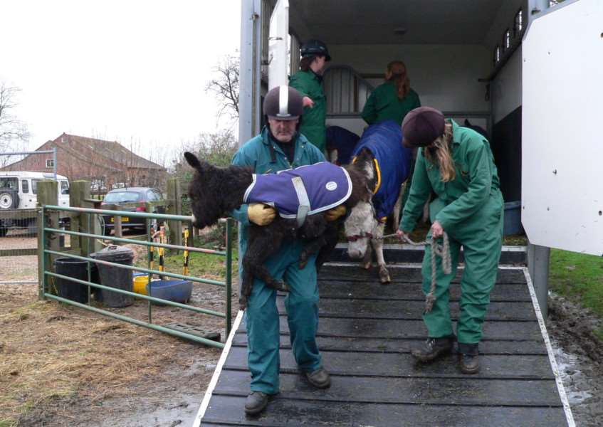 Rescued Esther was so weak when she was rescued she needed to be carried from the lorry. Submitted picture.