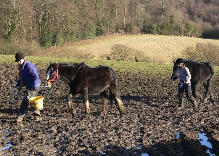 More than 100 horses and donkeys were living in horrific conditions at Spindle Farm, Amersham. Submitted picture.
