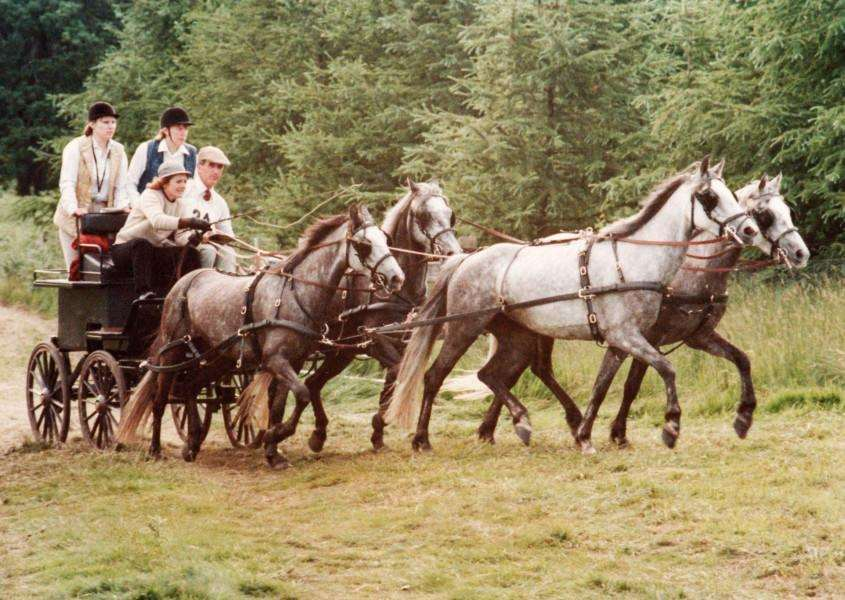 Susan Townsend-Parker: Pony Team Horse Driving Trials