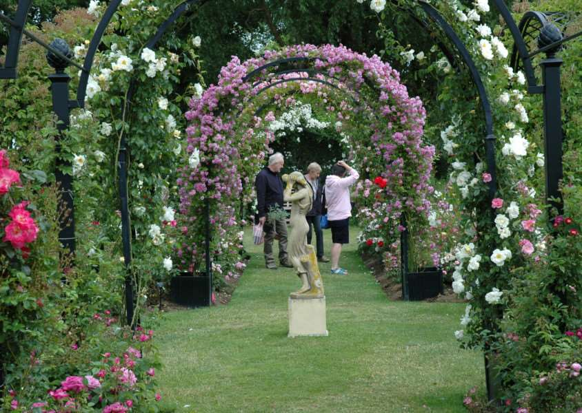 Visitors flocked to the fifth annual rose festival at Peter Beales Roses in Attleborough in June. ANL-150624-114921001