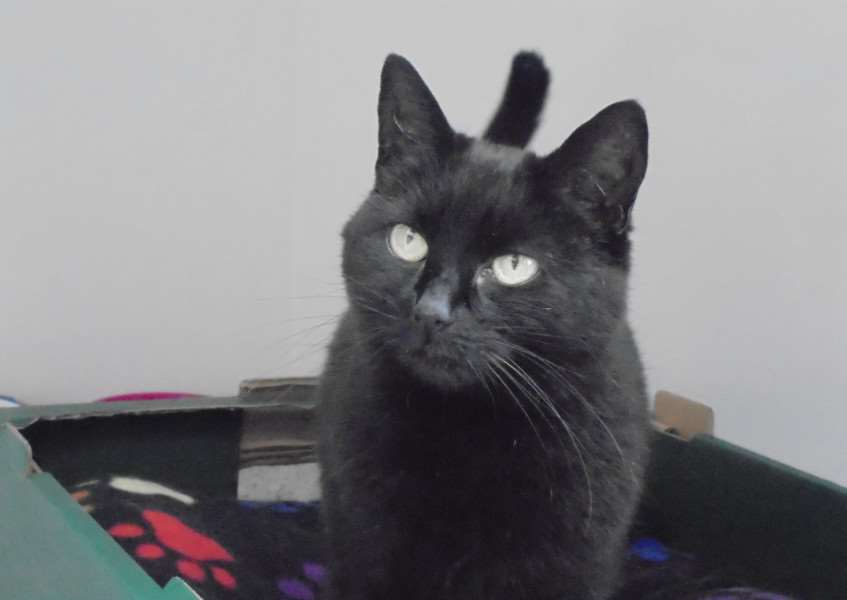 Cat of the Week - Eboni. Submitted picture.