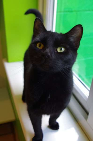 Cat of the Week - Pepper.