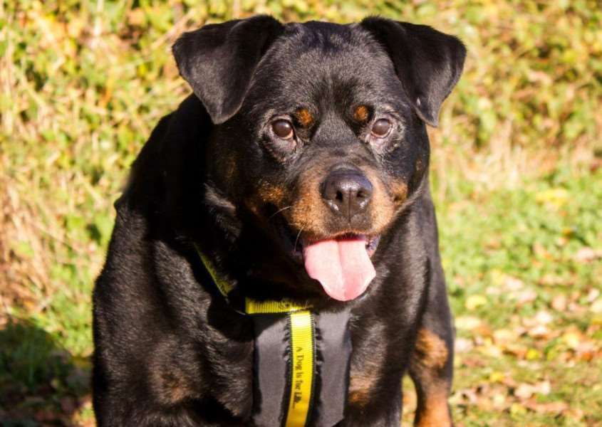 Damson, who is currently in the care of Dogs Trust Snetterton.