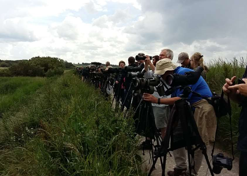 Twitchers line up for a glimpse of the great knot'Picture: Paul Eele/RSPB ANL-160619-114958001