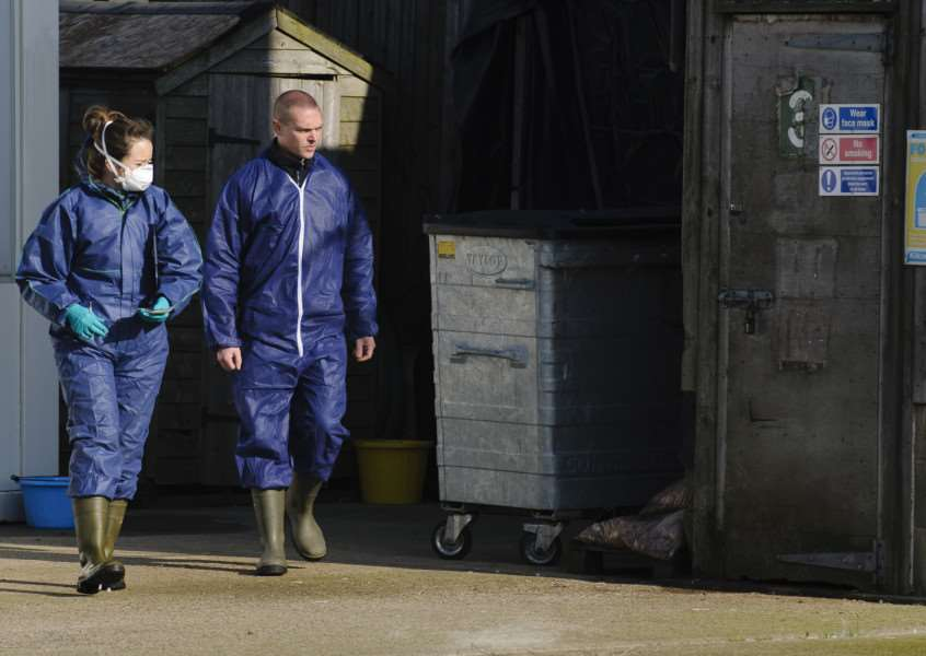 23,000 birds were culled at Bridge Farm near Redgrave after a bird flu outbreak