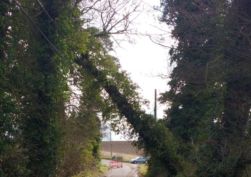 The tree in School Road, Hinderclay, currently resting on BTcables. Photo: Andrew Bushell.