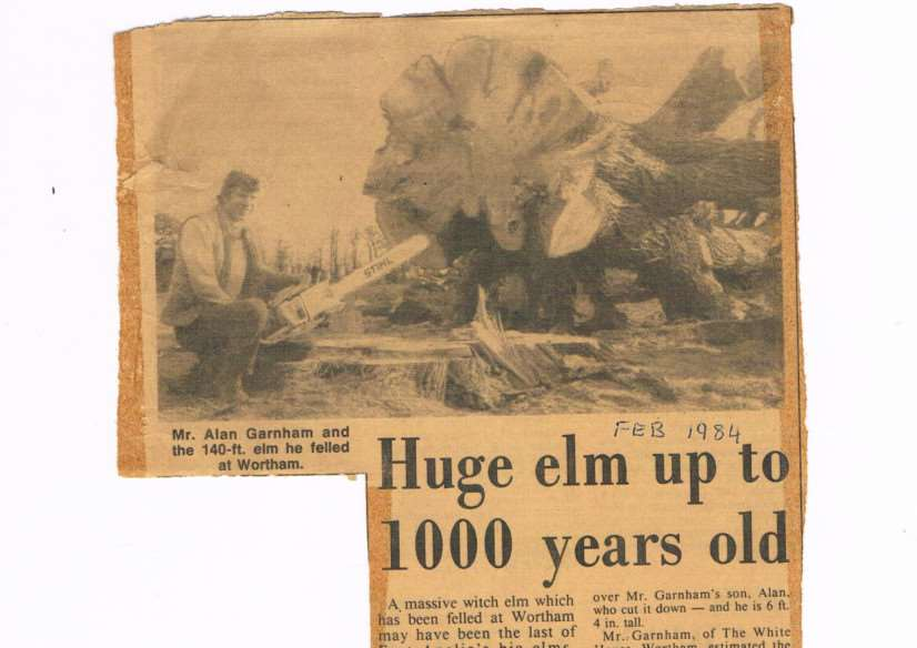 Cutting from the Diss Express of Alan Garnham with a massive elm ANL-150217-143001001