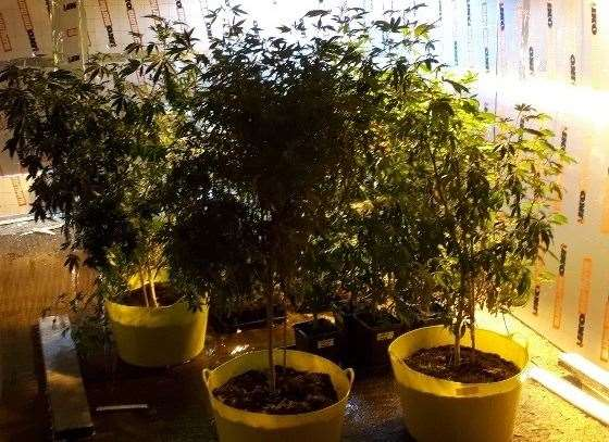 Cannabis farm at Earl Stonham. Picture: Suffolk Police.