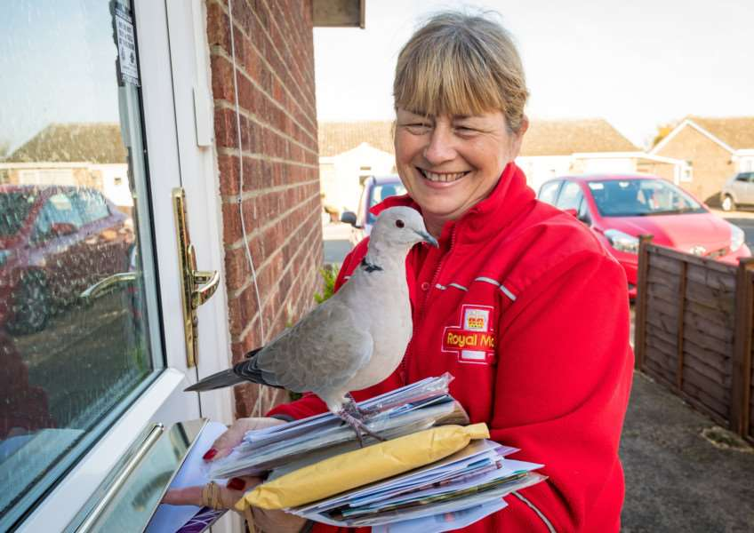 Collared Dove called Harold among other names with postwoman Alison Preston age 51. Picture: James Linsell-Clark.