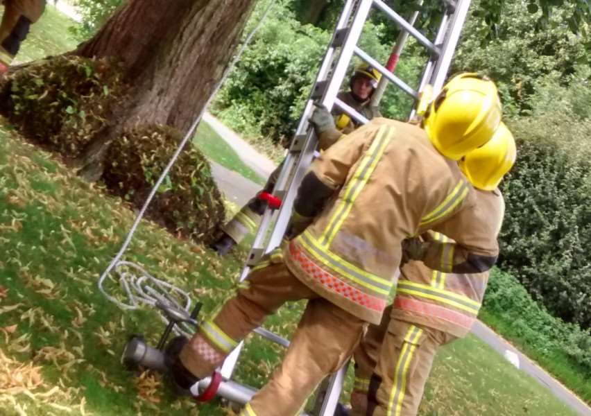 Diss fire crew attempt to rescue cat from 70ft tree in Roydon.