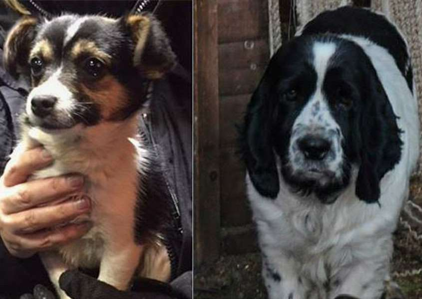Police are appealing for help to trace the owners of two dogs