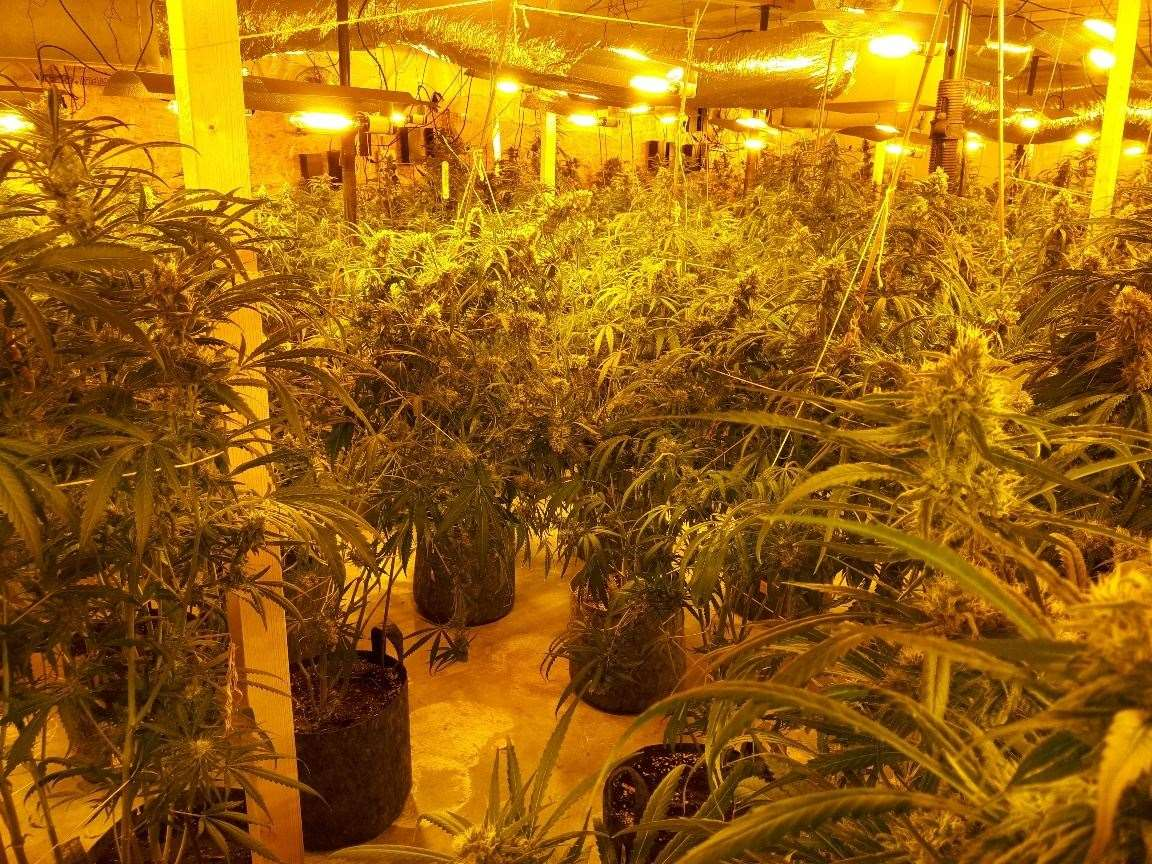 More than 800 plants were found at Redgrave Business Centre.