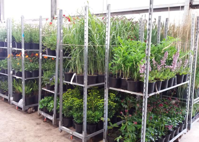 Wortham-based plant wholesalers Howard Nurseries are entering this year's Chelsea Flower Show. ANL-160518-105319001