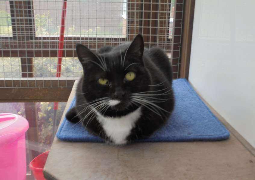 Cat of the Week -Socks