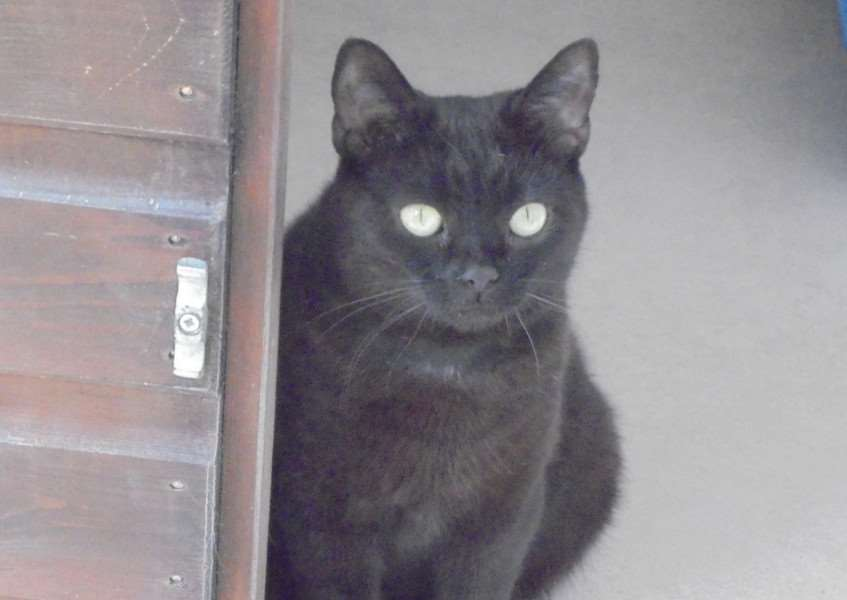 Cat of the Week - Stacey.