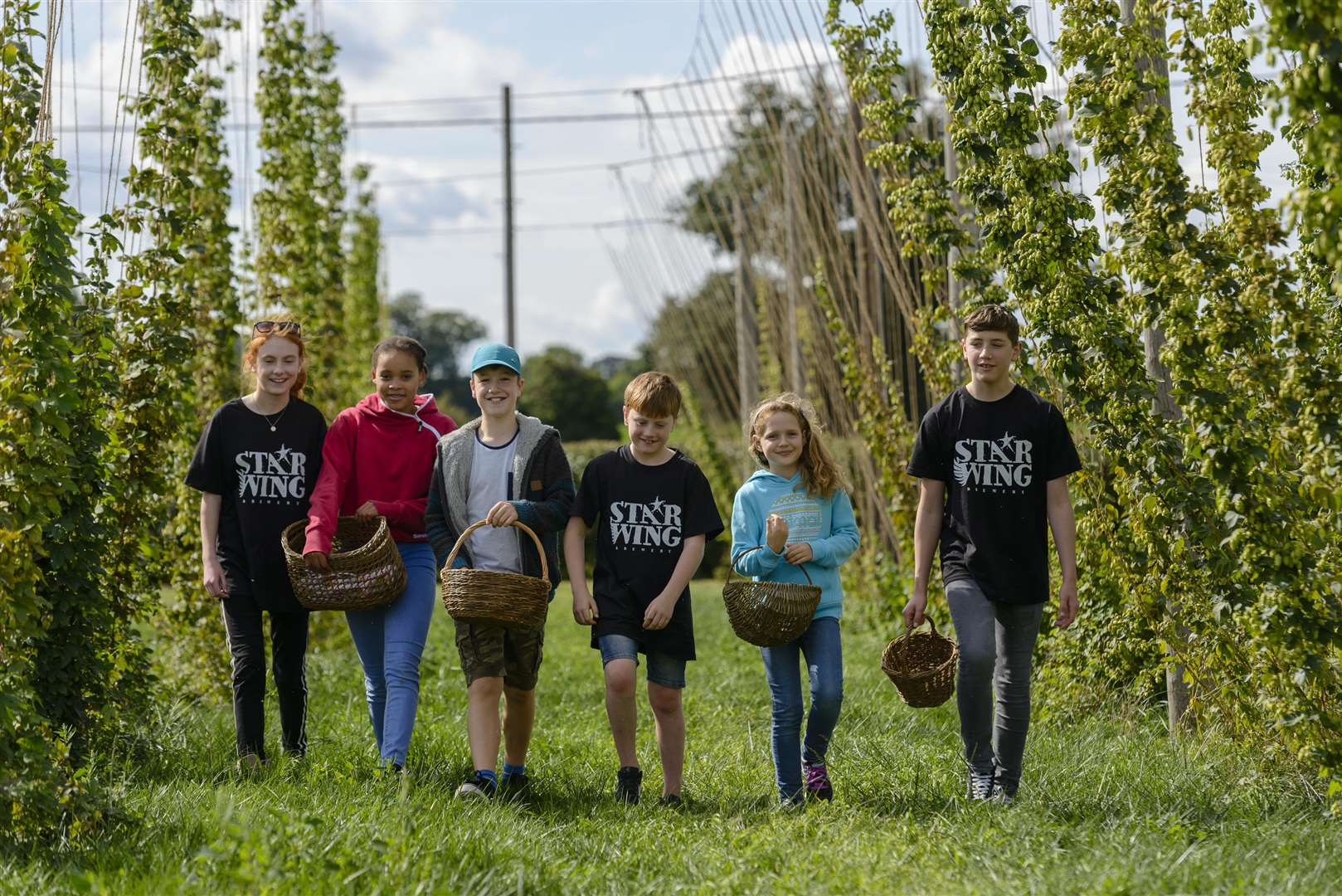 Redgrave, Suffolk. 15 September 2018 ..Hops 'n' Hogs picking at Star Wing Brewery..Picture by Mark Bullimore Photography. (4188524)